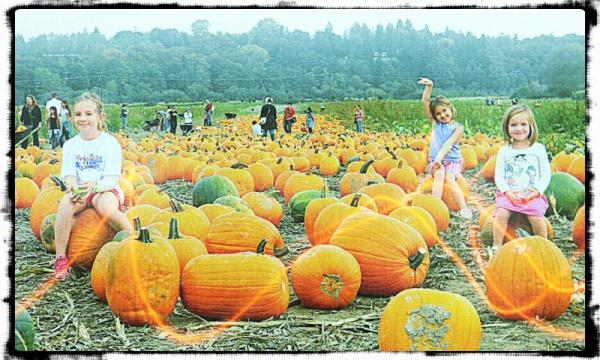 pumpkinfarm4